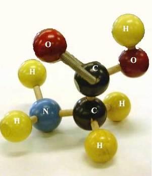 glycine.jpg